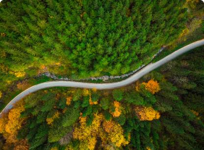winding road in a treeline - overhead shot